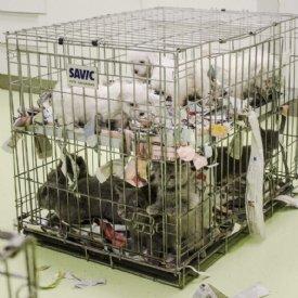 Wissenswertes_Illegaler Welpenhandel © Marion Puschitz