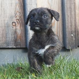 Wissenswertes_Pflegetipps für Hundewelpen © Sonja Widerström