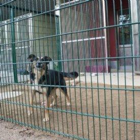 Projektspende_Hundehütte Aragon © Sonja Widerström