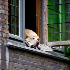 Hund in Haus © TiKo