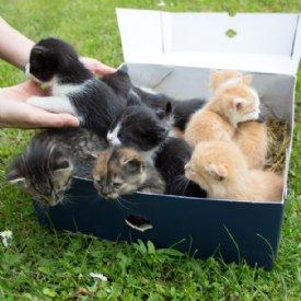 Kitten Mai 2019 © Nina Zesar