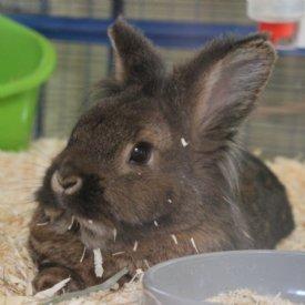 Bunny @ TiKo