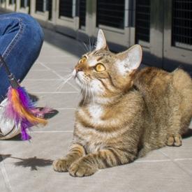 Daniela Ranftler - Katzen © Nina Zesar