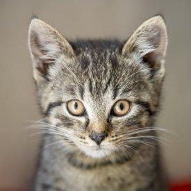 Kitten © Sonja Widerström
