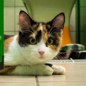 Katze Mirella © Nina Zesar
