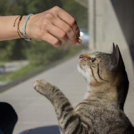 Daniela Ranftler mit Katze © Nina Zesar