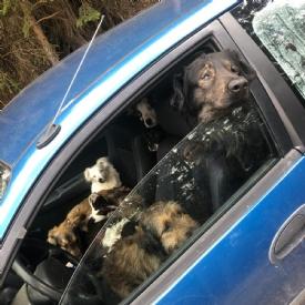 Dank aufmerksamen Tierfreunden konnten die in ein Auto eingepferchten Hunde gerettet werden. © TiKo