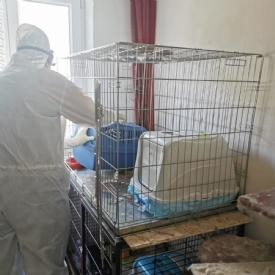 Auch hier in Kärnten ist Tierquälerei alltäglich. Diese Zustände haben wir im April in einem Messiehaus mit mehreren verwahrlosten Katzen vorgefunden © TiKo