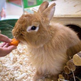 Kaninchennahrung © TiKo