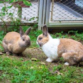 Wiesenkräuter und Blätter knabbern Kaninchen am liebsten © TiKo