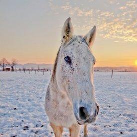 Pferd im Winter © TiKo