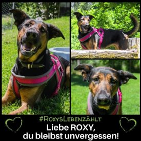 Roxys Leben zählt © TiKo