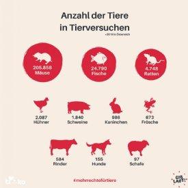 Tierversuche in Österreich © TiKo