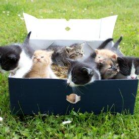 Kitten Karton © Nina Zesar